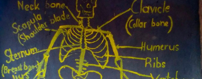 Human Skeleton, a visual aid